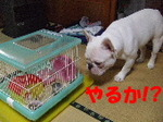 blog10.3-1.JPG